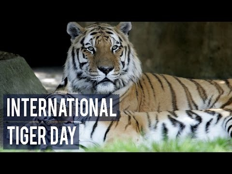 ias-coaching-centres-bangalore-hyderabad-pragnya-ias-academy-current-affairs-International-Tiger-Day