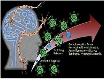 ias-coaching-centres-bangalore-hyderabad-pragnya-ias-academy-current-affairs-Scientists-attack-coronavirus